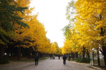 Nakajimakoen in autumn