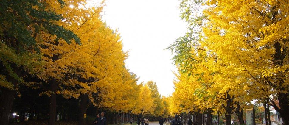 Le Parc Nakajima en Automne