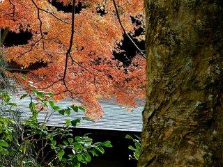 ใบไม้ฤดูใบไม้ร่วงโอบล้อมสวน