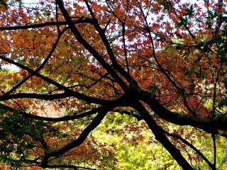 ต้นไม้หลากสีสัน