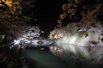 Hoa anh đào nở tại thành cổ Fukui