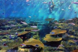 Este á o maior tanque no aquário, no qual se encontra uma vasta abundância de diferentes espécies vivendo em conjunto