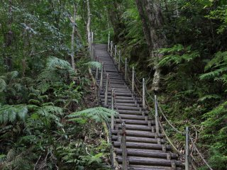 The staircases takes some of the mud out of hiking to Hiji Falls but the elevation changes are definitely left in