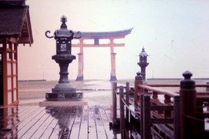 Torii or Torii gate in the mist