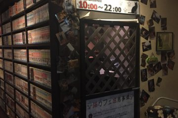 Media (and Cat) Cafe Popeye, Numazu