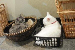 Shimon and Kuri love baskets of all shapes.