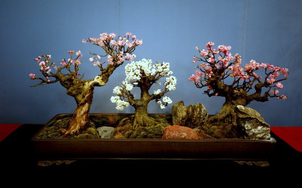 작은 분재 자두나무의 아름다운 트리오