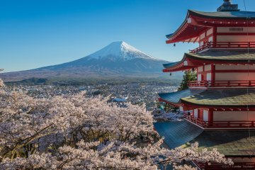 JapanTravel Special: Mount Fuji Spring Photography Adventure