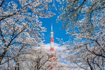 Cherry Blossom Photography Tour, Mar 31 - Apr 12