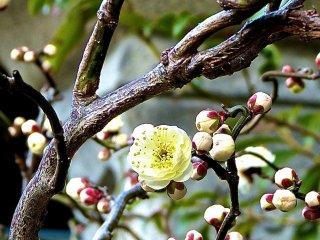 녹색 흰색 꽃