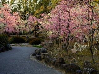 Замкнутый сад со множеством сливовых деревьев