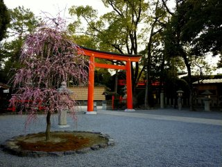 Torii merah di pintu masuk halaman kuil