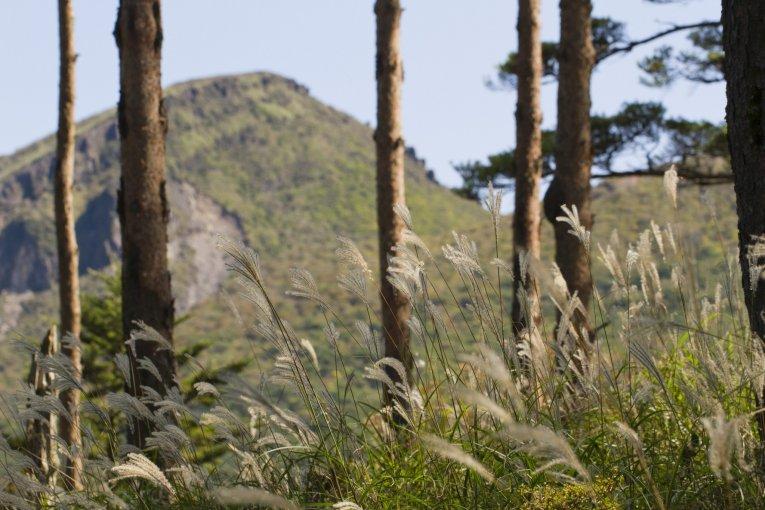 えびの高原キャンプ場