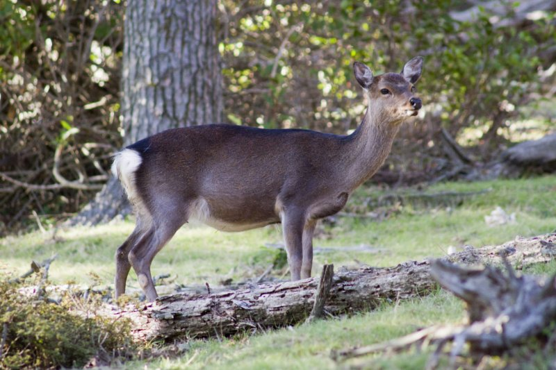 Deer even come out in the daytime