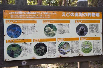 Watch for animals in the park