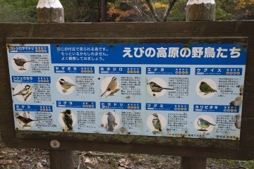 Avian visitors identified here; the best place for birdwatching is near Rokukannon Pond