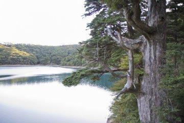 Rokukannon Pond
