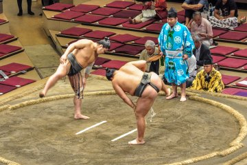 <p>Some of the lower ranked Sumo</p>