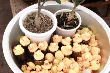<p>Ducks. Ducks everywhere!</p>