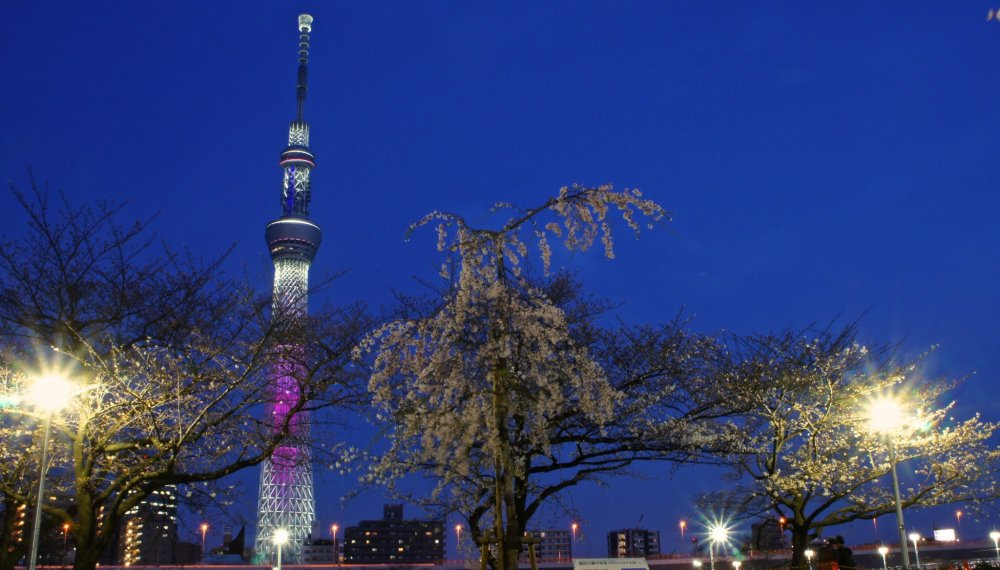 الشجرة الشهيرة الساكورا الباكية من فوكوشيما (ميهارو تاكيزاكورا Takizakura) ، وهو الفرع الذي تم التبرع به لسوميدا بارك في عام 2011. وهو جزء من مشروع ساكورا فوكوشيما التي تهدف إلى الحفاظ على شجرة في مواقع مختلفة في جميع أنحاء اليابان ويتم تمريرها إلى الأجيال المتعاقبة . الفرع له ثلاث سنوات فقط من العمر وتم نجاحه بالفعل .