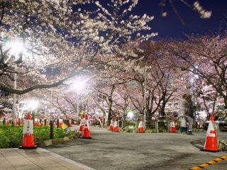 سوميدا حديقة الإضاءة في الليل . مزدحمة جدا في المساء ؛ ومع ذلك فإن معظم الزائرين في بداية الليل ثم لا يلبث المكان حتى يصبح هادئاً في وقت لاحق .