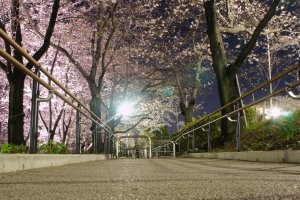 Walking trails with blossoms on both sides at Sumida Park