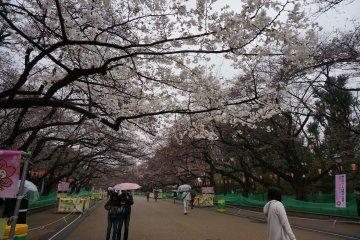 <p>เช้าหน่อยที่ ueno park คนจะยังไม่เยอะมาก ที่นี่มีถังขยะเพียบ คนญี่ปุ่นช่างเตรียมพร้อม</p>