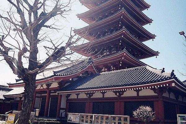 สถาปัตยกรรม กับ ธรรมชาติ ภายในวัดอาซากุสะ