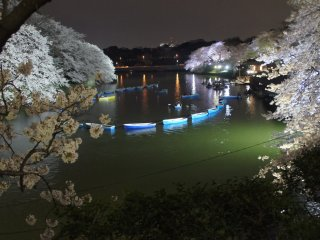 A long line of rowing boats lined up at Chidorigafuchiduring the cherry blossom light-up. The green color of the water is also amplified by the lights specifically directed onto the water's surface.