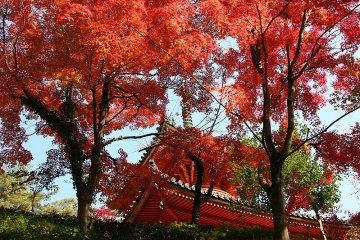 Mitaki Temple