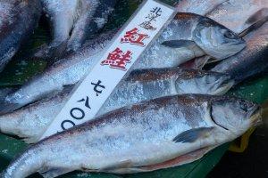 ปลาสดที่จับได้ในแต่ละวัน