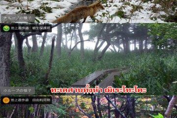 <p>ทัศนียภาพในป่าอุทยานฌิเระโทะโคะ ในช่วงฤดูระวังระบบนิเวศน์ธรรมชาติ (ใบไม้ผลิและฤดูร้อน) และฤดูช่วงเปิดอิสระ (ต้นฤดูใบไม้เปลี่ยนสี ก่อนปิดป่า)</p>