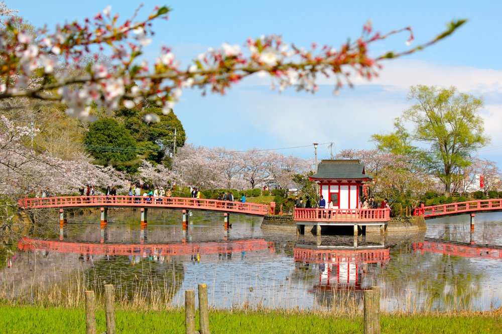Cherry blossom trees surround the large pond to highlight Bentendou