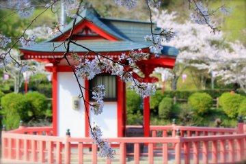 ซากรุะที่สวนโมะบะระ จังหวัดชิบะ