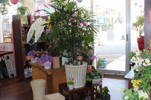 切り花ばかりでなく鉢植えの木なども販売