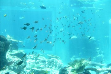 <p>Tiddlers: some of the smaller fish in the Kuroshio tank.</p>