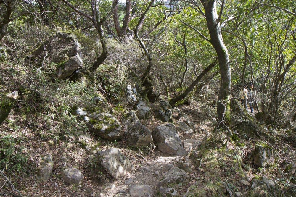 森の中を進む韓国岳麓のハイキングコース