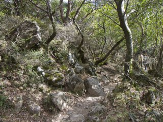 La forêt au pied du Mont Karakuni