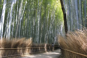 <p>Path fences that are pleasant on the eye in Sagano Kyoto</p>