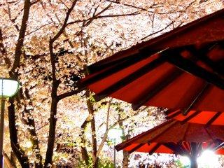 Des fleurs roses sur des ombrelles rouges