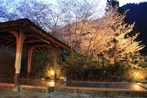 อ่างอาบน้ำแบบ Open air ในช่วงฤดูใบไม้ผลิที่มีต้นซากุระและขุนเขาเป็นฉากหลัง
