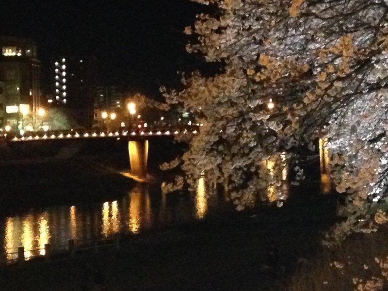 사쿠라교와 벚나무가 만개한 야경