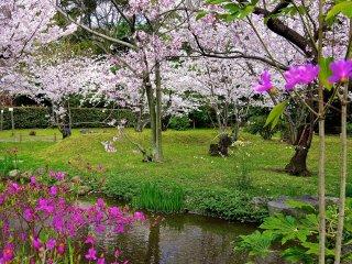 桃色の花と小川