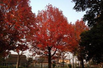 Осенний парк Синрин