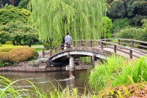 สายลมพัดผ่านคลอเคลียเคล้าต้นหลิวในอีกฟากของสะพาน กับเจ้าปลาน้อยที่กระโดดรับอากาศอย่างเริงร่า