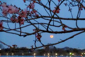 赤銅色の満月