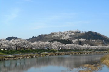 <p>Whole cherry trees on the hill and the riverbank are mirrored on the water surface of the beautiful Shiroishi River</p>