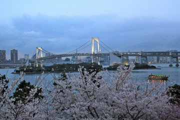 <p>Odaiba Marine Park is a beautiful location to view some cherry blossom trees late March through early April.</p>