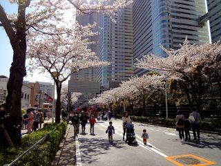 Sakura-michi Promenade