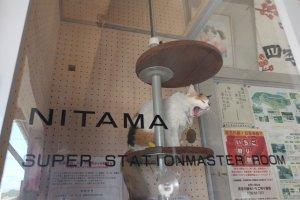 นิทามะกำลังหาว